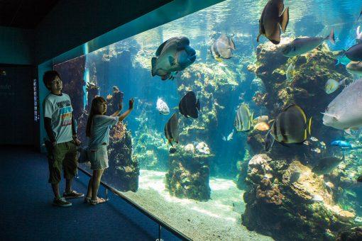 noumea aquarium tour